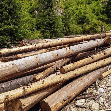 直輸入木材でも低コスト